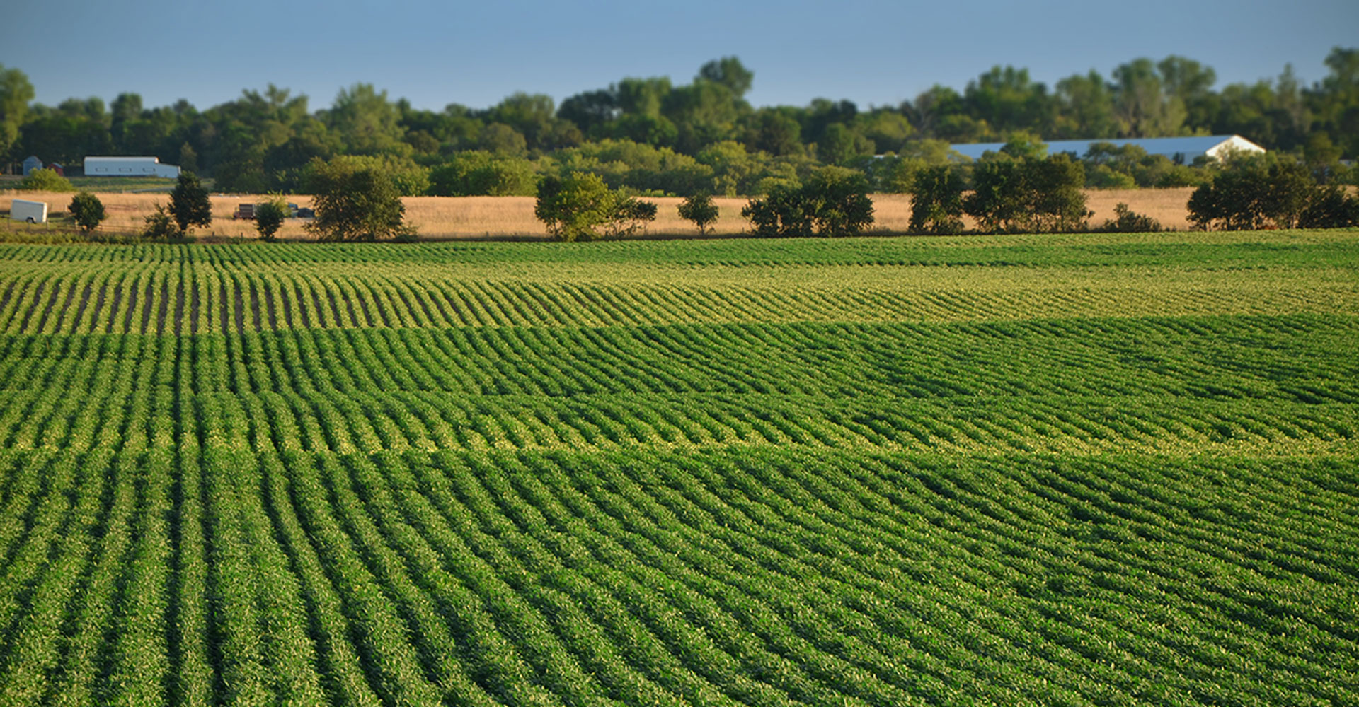 10 Regenerative Agriculture Practices Every Grower Should Follow