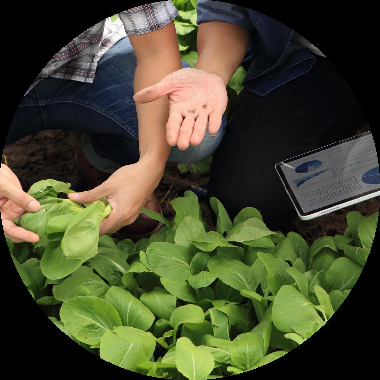 Heliae, Regenerative Agriculture